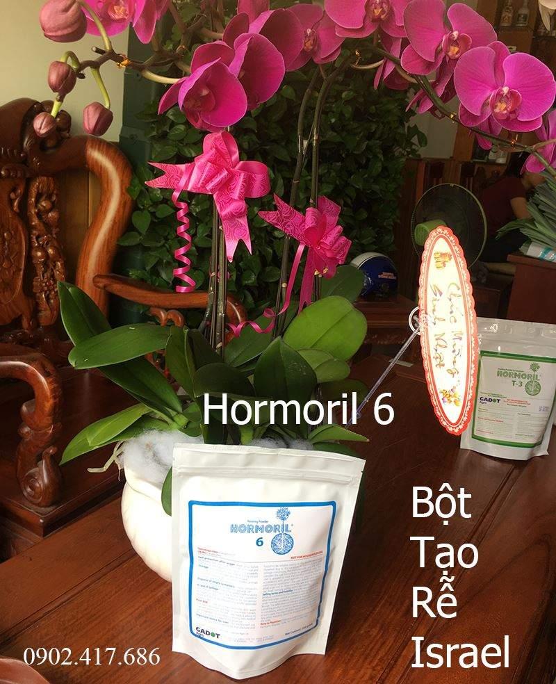 bot-tao-re-hormoril 6-1