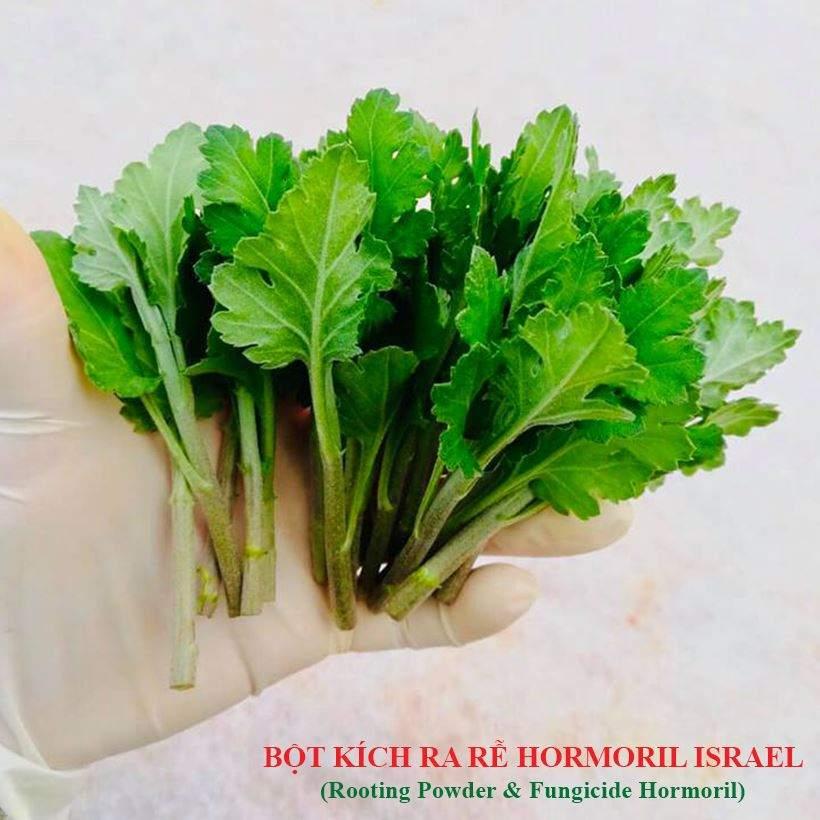 bot-kich-ra-re-israel-danh-cho-hoa-cuc