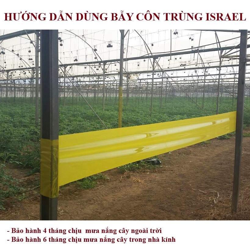 bay-bo-tri-keo-vang-con-trung-israel 0